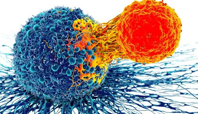 How immune system works