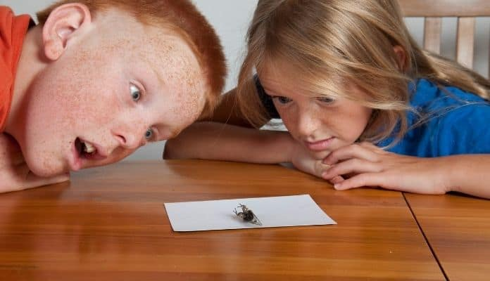 Children fearful of bugs